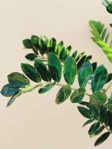 rovato castello quistini piante corso